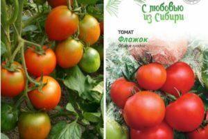 Томат талисман: описание и характеристика сорта, выращивание и урожайность с фото