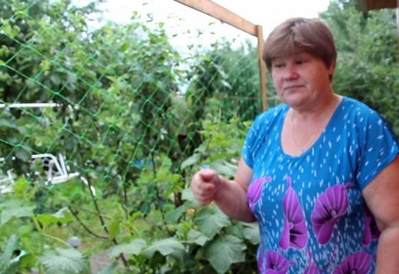 Посадка семян в улитку юлия миняева