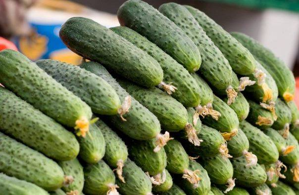 Огурцы берендей — характеристика и правила выращивания сорта