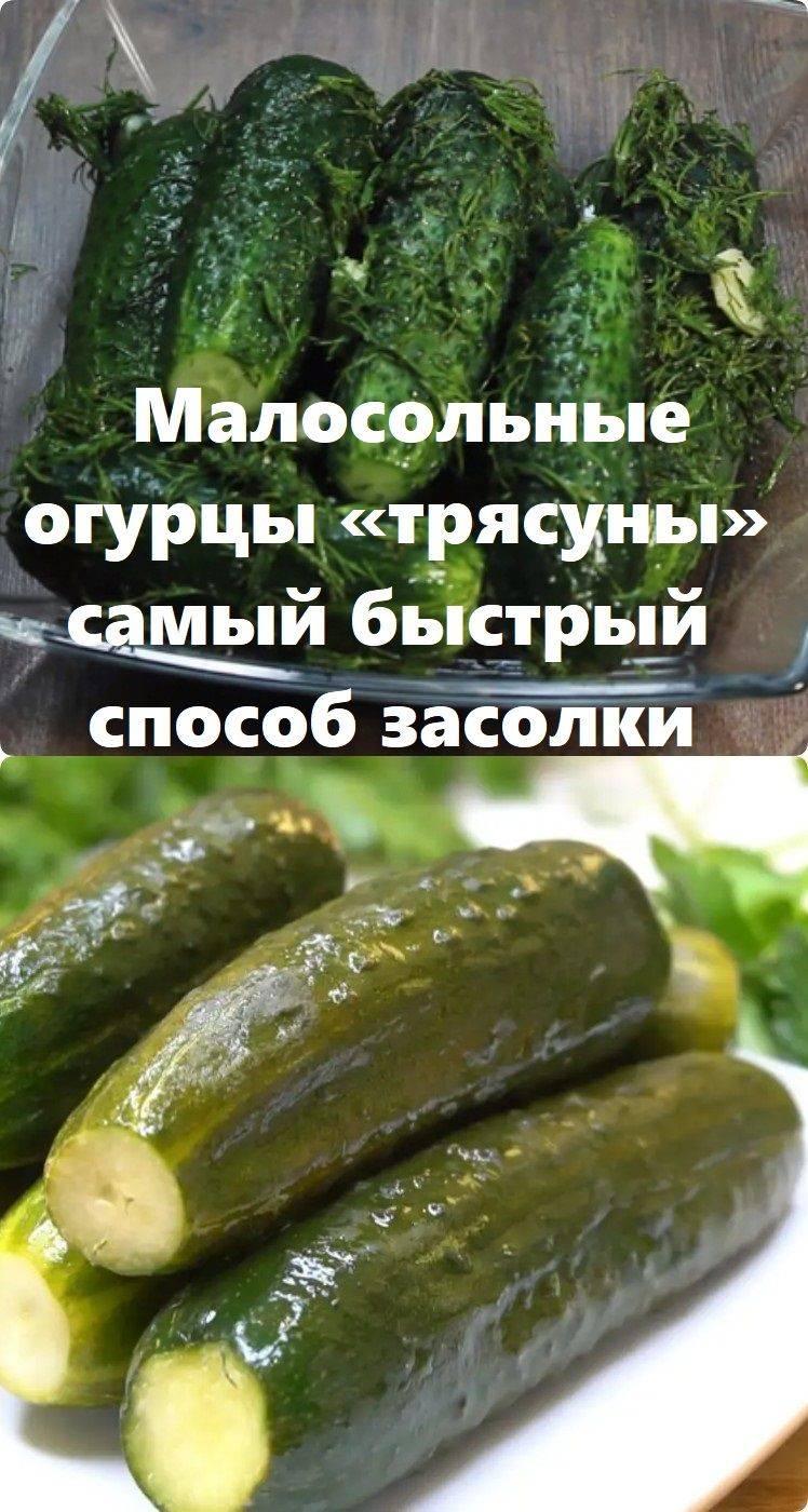 Огурцы-трясуны: рецепт пошагового приготовления малосольной закуски