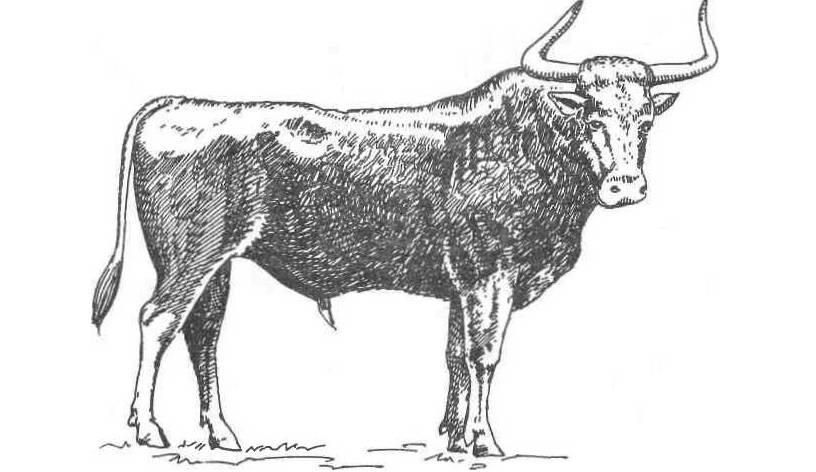 1 происхождение домашних животных