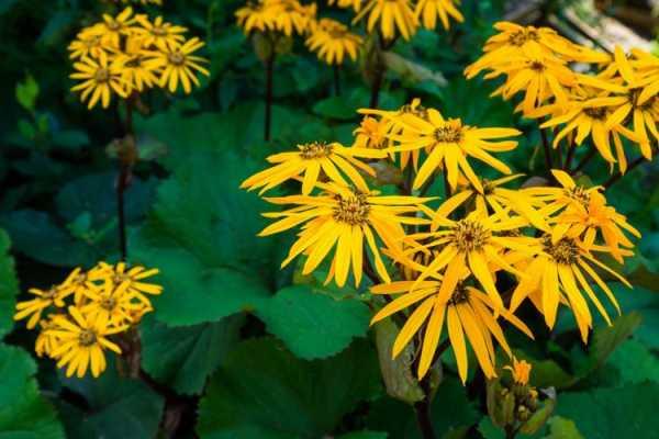 Как подготовить цветы к зиме: копилка полезных советов для дачников