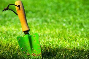Боремся с сорняками на дачном участке при помощи газонной травы. газонная трава, которая уничтожает сорняки.