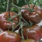 Томат урал f1: описание сорта, особенности выращивания и урожайность