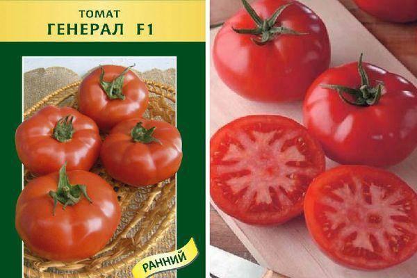 Бравый генерал – особенности крупноплодного томата, подробное описание, секреты выращивания