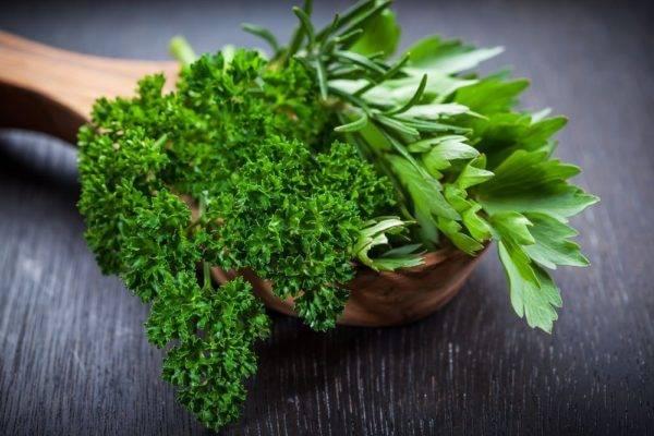 Обыкновенная, но вкусная и полезная листовая петрушка: описание, сорта, внешний вид на фото и не только