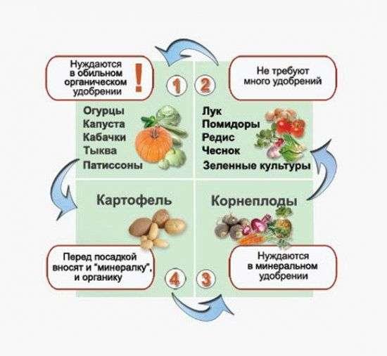 Посадка овощей на следующий год после чеснока – что выбрать?