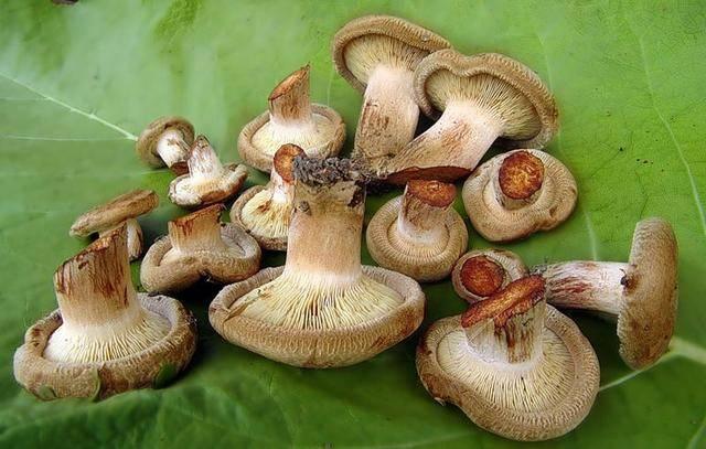 Маринованные грибы — рецепты: холодный и горячий способы маринования грибов