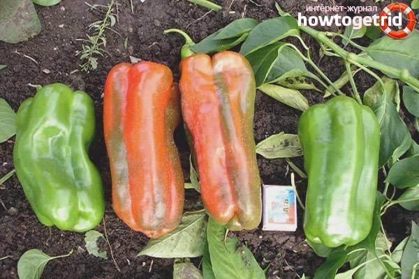 Выращивание перца какаду