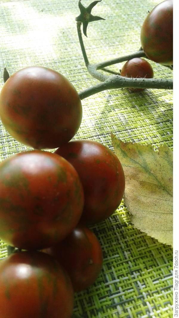 Сорт помидора «полосатый шоколад» или «шоколадные полосы»: фото, отзывы, описание, характеристика, урожайность