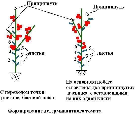 Схема и правила формирования куста перца в теплице