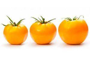 Метод терехиных по выращиванию томатов — особенности и преимущества