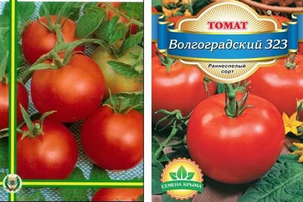 Лучшие сорта помидоров для Вологодской области