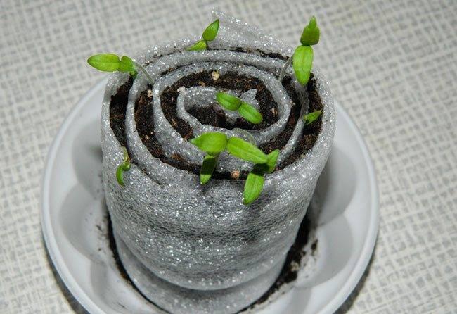 Сажаем помидоры в улитку по методу Юлии Миняевой