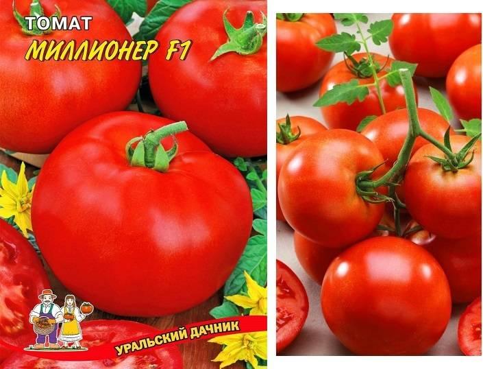 Как сеять томаты на рассаду в домашних условиях в 2020 году
