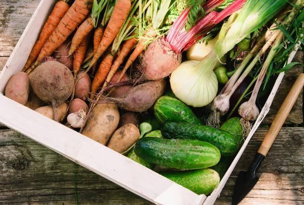 Как правильно хранить овощи и зелень