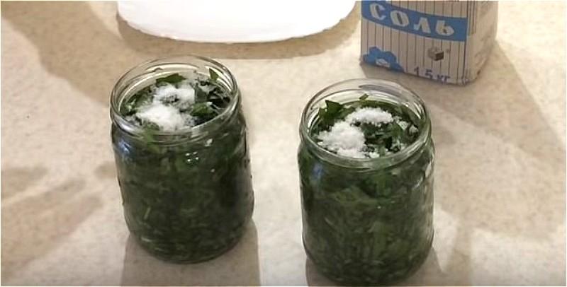 Хорошие рецепты заготовки щавеля на зиму в домашних условиях