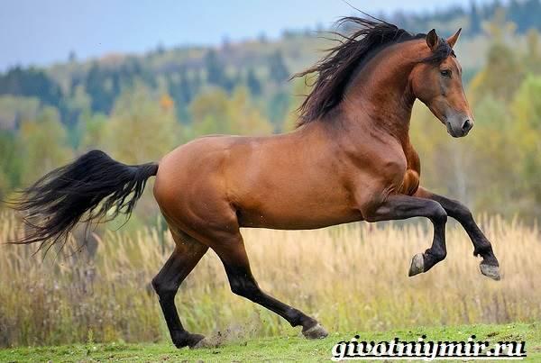 Гнедая масть лошади: история, характер, внешний вид, породы