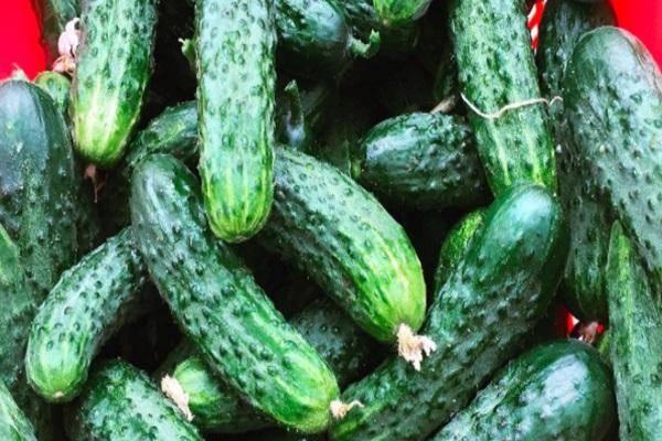 Топ 10 рецептов правильной заморозки овощей на зиму в домашних условиях своими руками