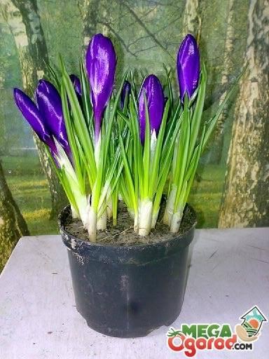 Выращивание цветов на балконе: когда сажать, в какой горшок