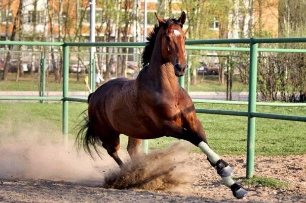 Основные правила разведения лошадей