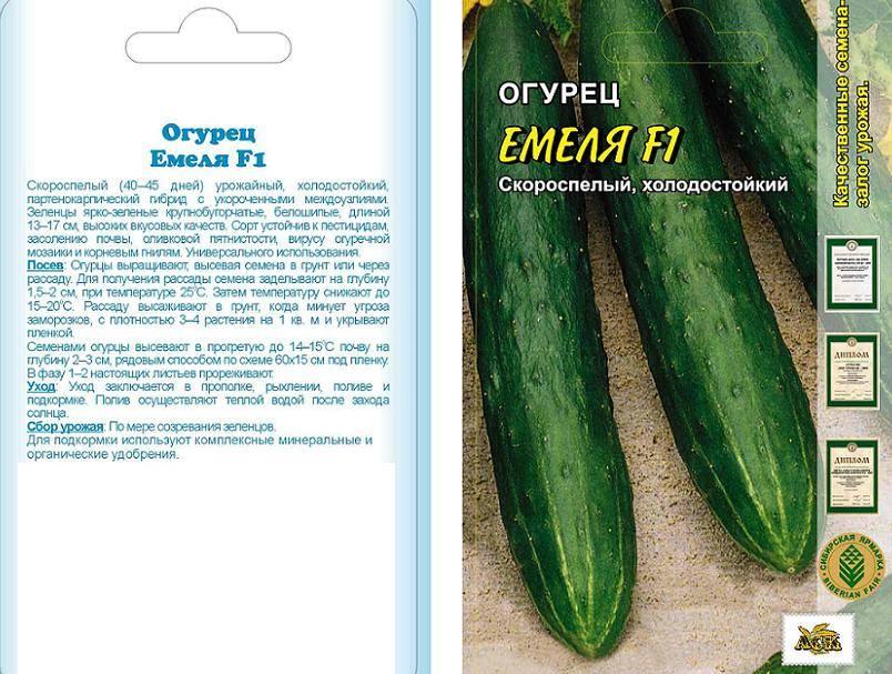 Описание огурцов емеля f1 и выращивание рассадным методом в теплице