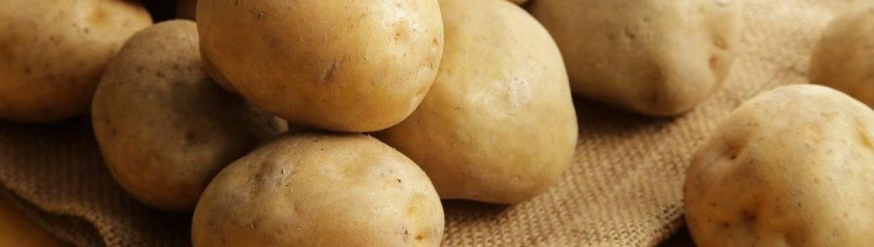 картошка сорт лимонка описание с фото особенность позволяет использовать