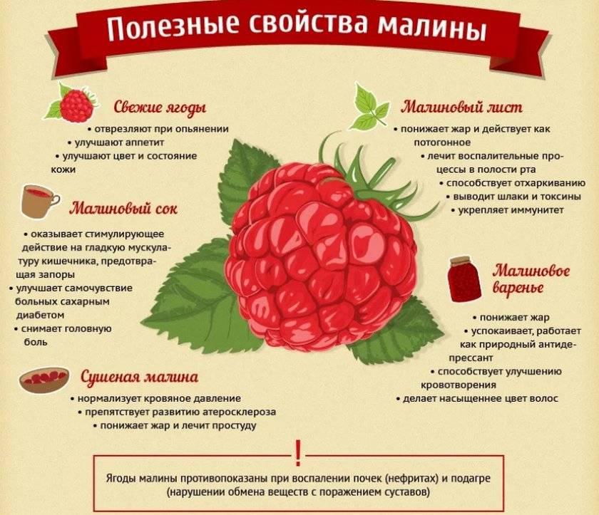 Лучшие штамбовые сорта малины. описание и отзывы