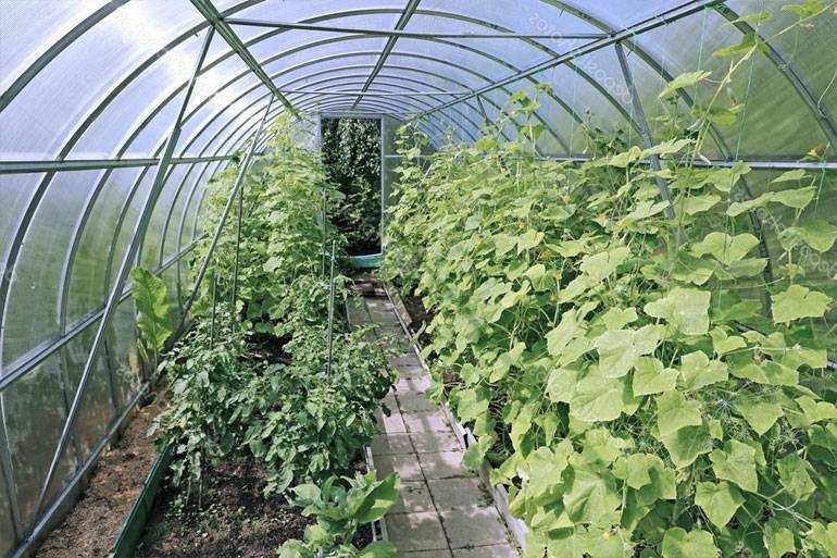 Описание самых лучших, урожайных сортов огурцов для теплиц из поликарбоната