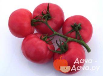 Гибрид томата «пинк импрешн f1»: фото, отзывы, описание, характеристика, урожайность