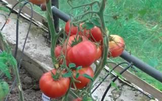 Томат сорта сластена: характеристики, описание и нюансы выращивания, отзывы