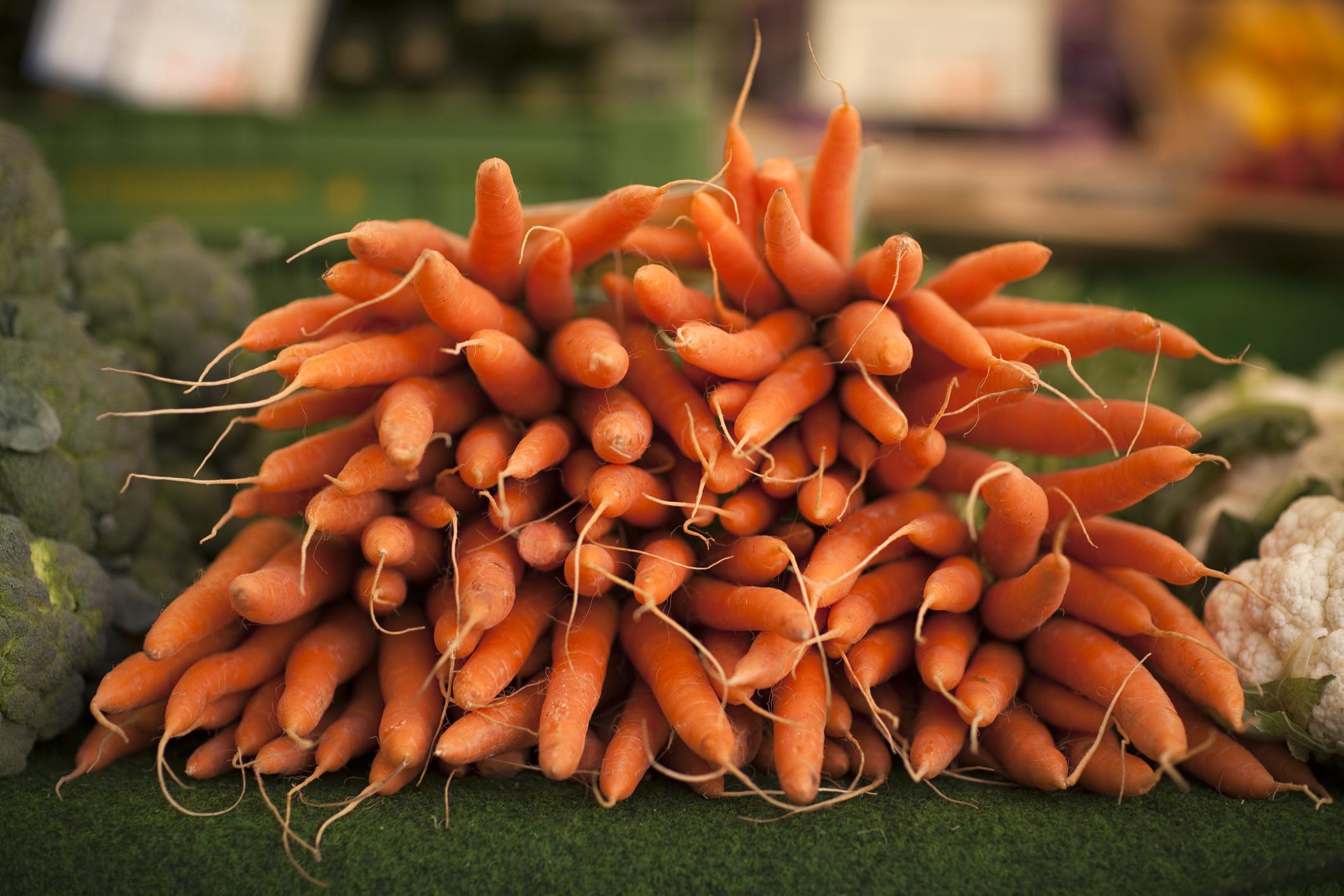 Морковь канада f1 — описание и характеристики сорта