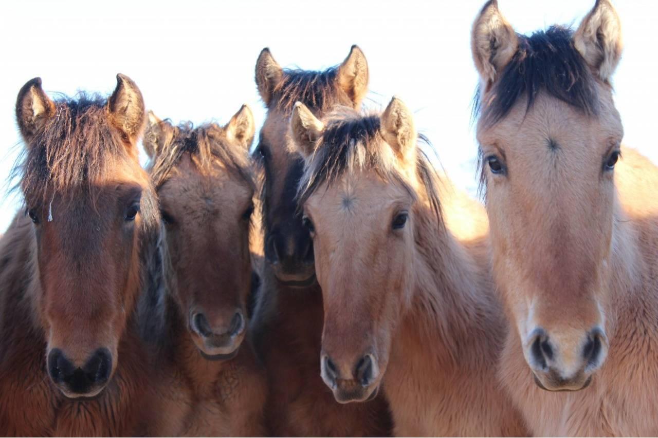 Лошади в россии