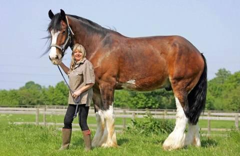Сколько весит лошадь: средняя и максимальная масса, как определить