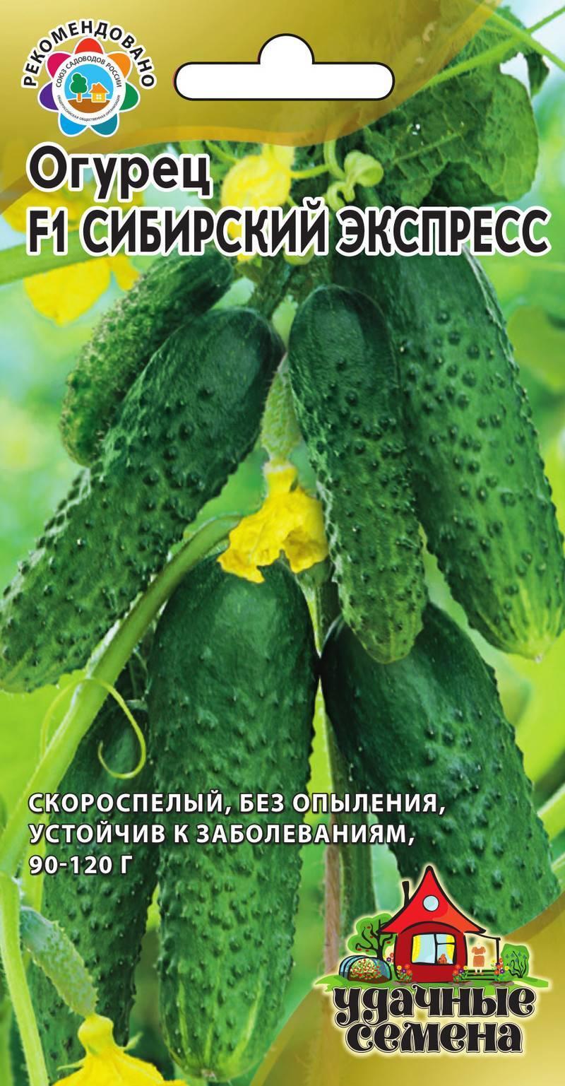 Лучшие сорта огурцов из сибирской селекции с описанием на 2020 год