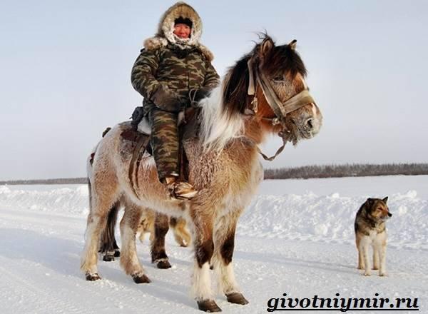 Разведение лошадей в домашних условиях: кормление, содержание и уход