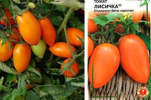 Томат «сибиряк f1»: крупный, урожайный, стойкий