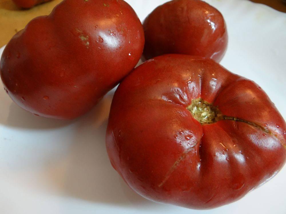 Характеристика и описание томата «детская сладость»