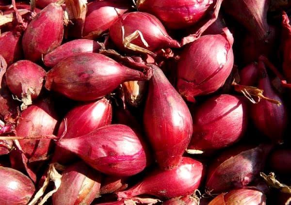 Лук кармен: характеристика сорта, методы выращивания и применение