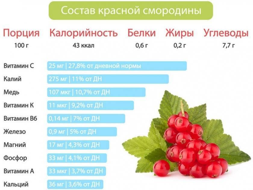 18 лучших сортов красной смородины с крупными ягодами
