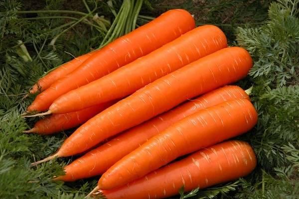 Морковь сортотипа шантенэ – проверенные временем лёжкие сорта