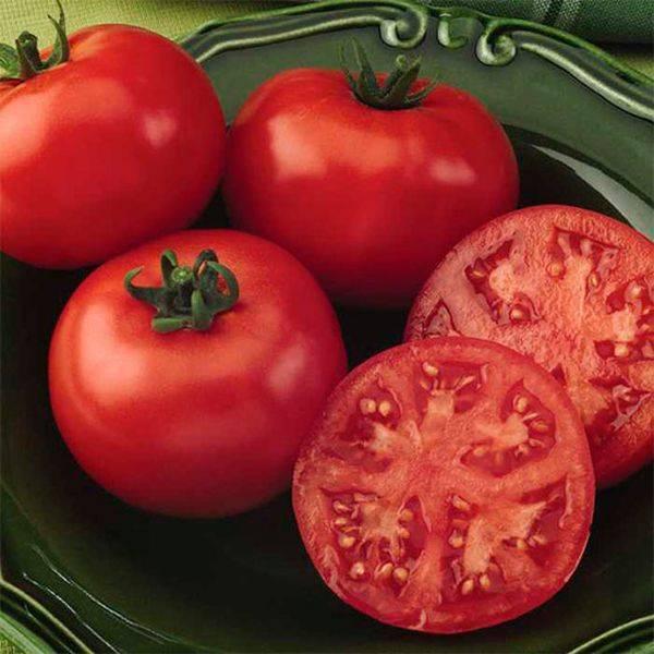 Характеристика и описание сорта томата Король ранних, его урожайность