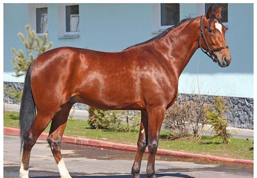 От пони до тяжеловоза: сколько весят и что могут лошади?