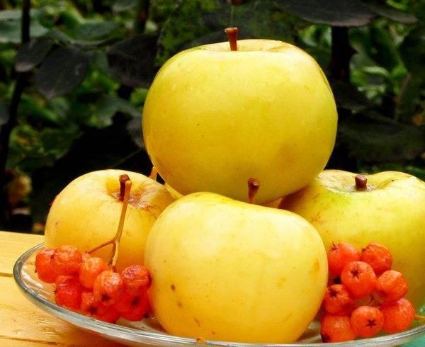 Яблоки на зиму в банках — заготовки и рецепты — моченые и дольками, компот, варенье, заготовка для пирогов. как правильно хранить яблоки зимой дома