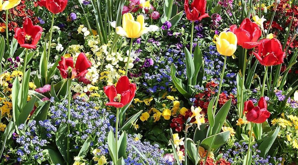 Как можно красиво посадить тюльпаны, выбор сортов и идеи дизайна