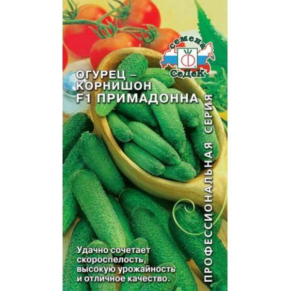 Томат примадонна f1: описание высокоурожайного гибрида, правила выращивания и ухода