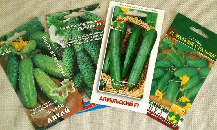 Лучшие гибриды (сорта) самоопыляемых (партенокарпических) огурцов для выращивания в теплице и открытом грунте