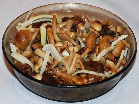 Что можно сделать из грибов коровников. грибы коровники – как и сколько правильно варить? вкусные рецепты заготовок на зиму с этими грибами