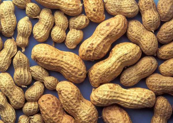Вся правда об арахисе: для кого земляной орех представляет смертельную опасность