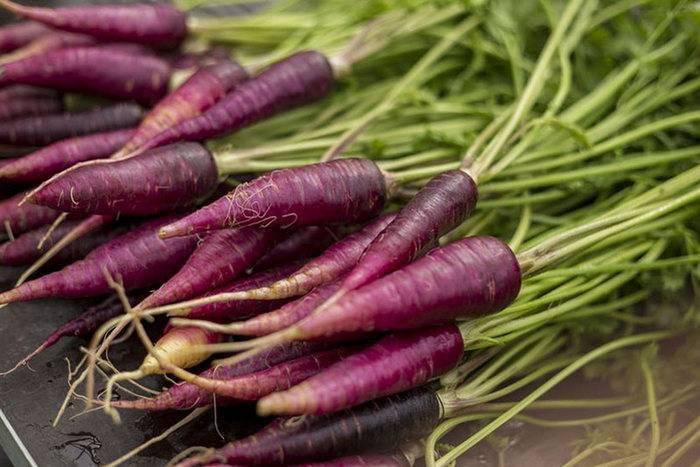 Почему морковь корявая и рогатая: причины проблемы и решение